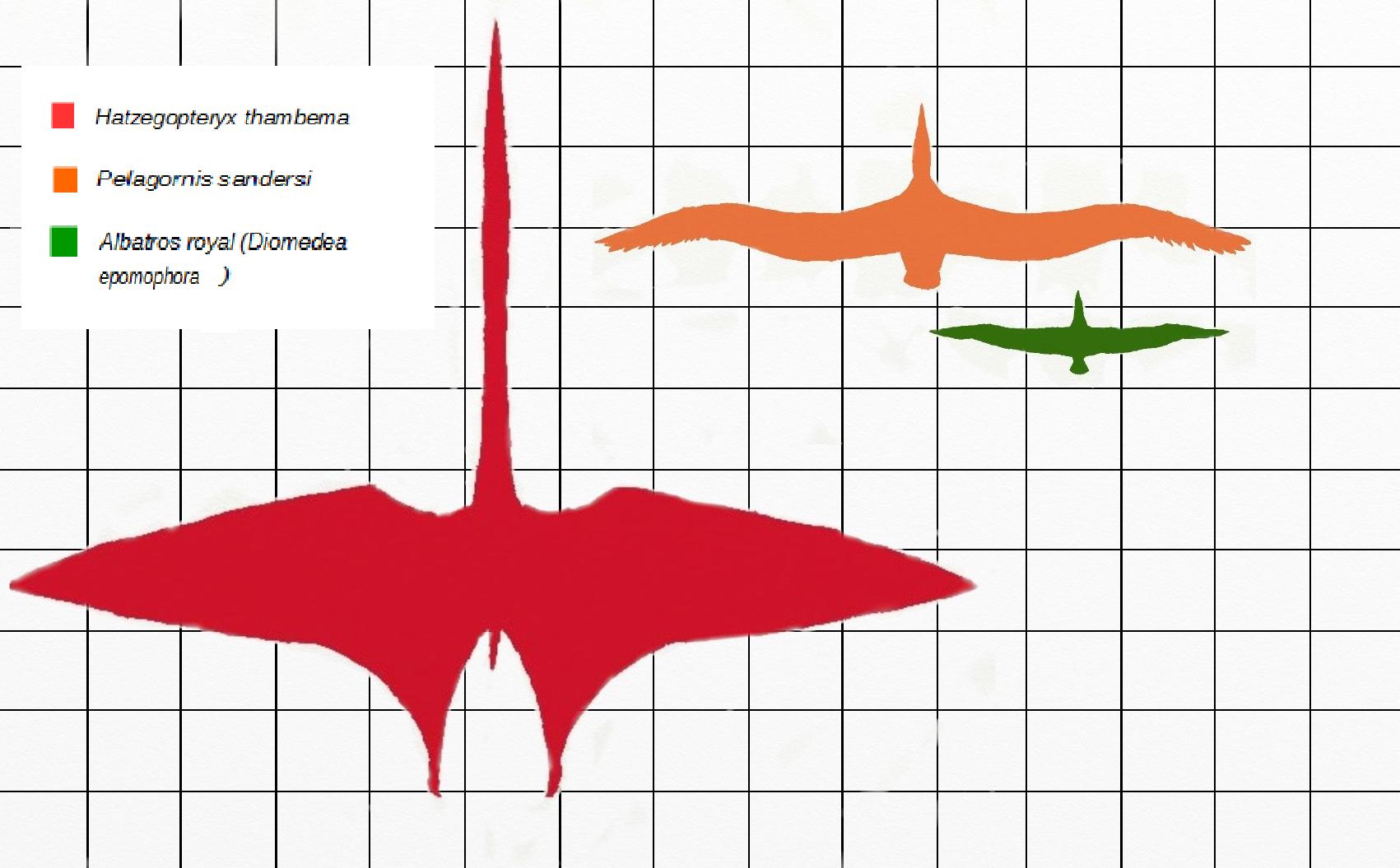 Hatzegopteryx Size Hatzegopteryx  ...