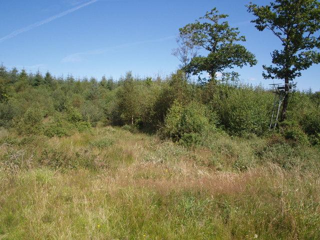 Cookworthy Moor Plantation - geograph.org.uk - 511907