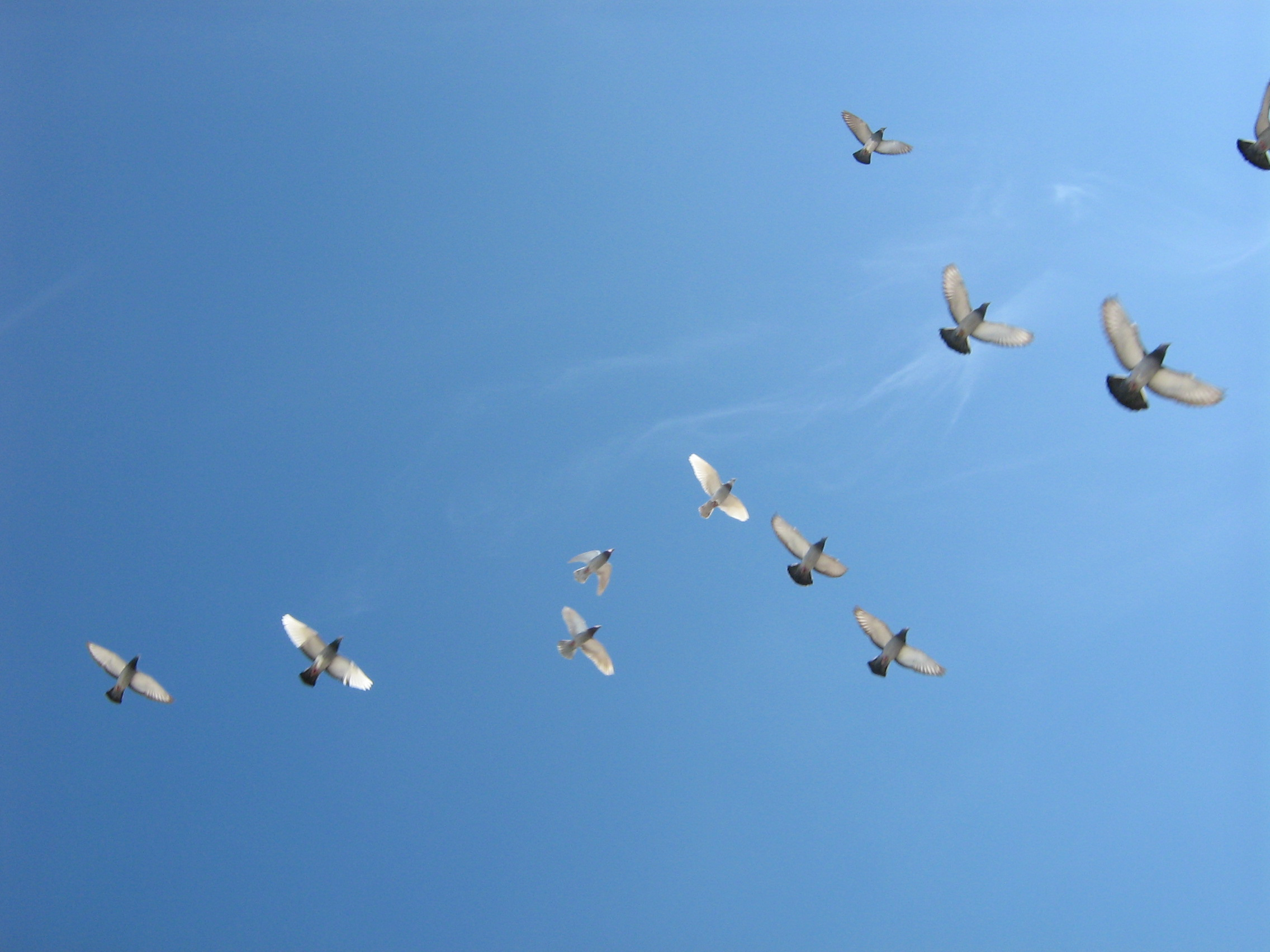 Birds flying, Casablanca, Morocco