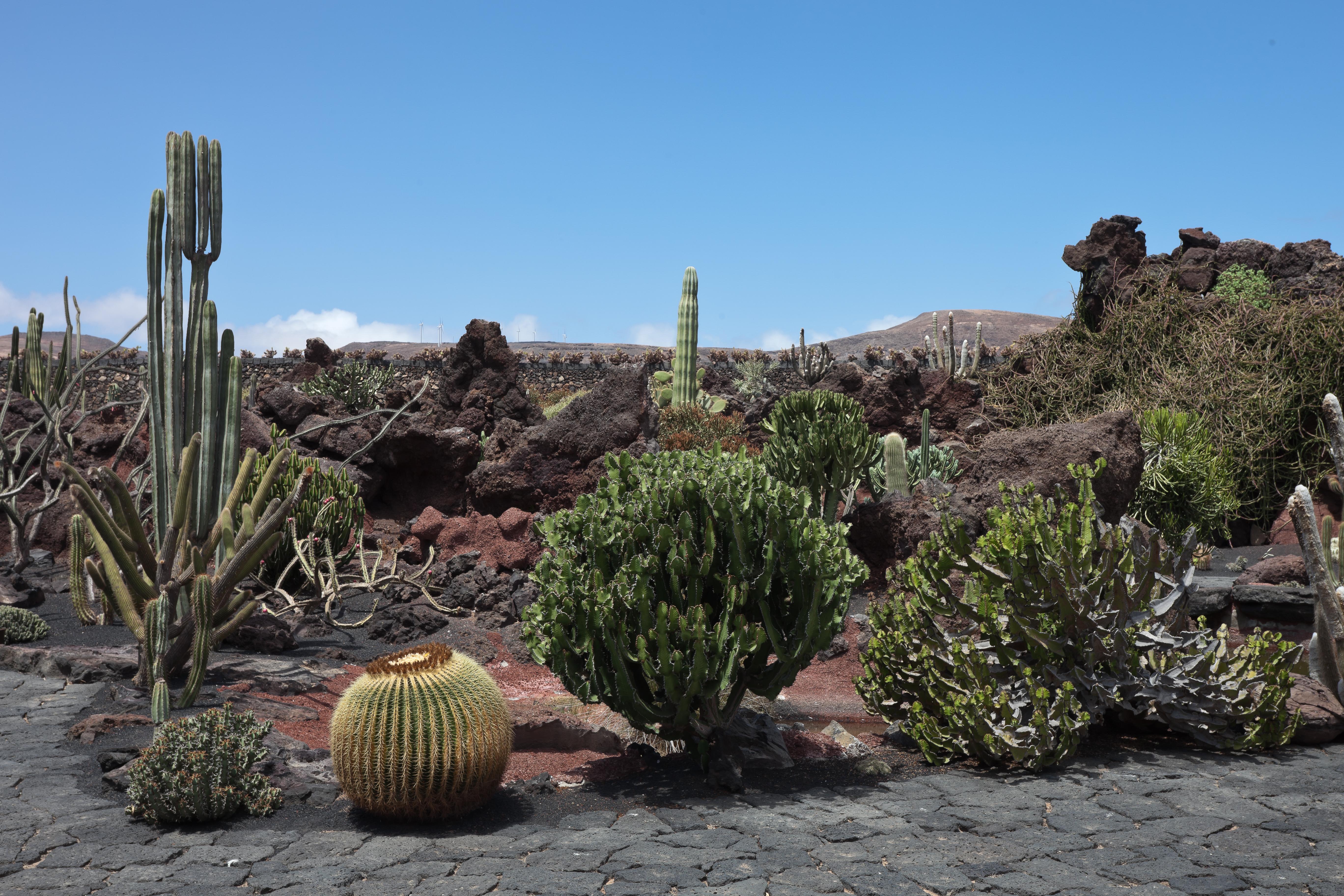 File guatiza jard n de cactus lanzarote for Jardines con cactus