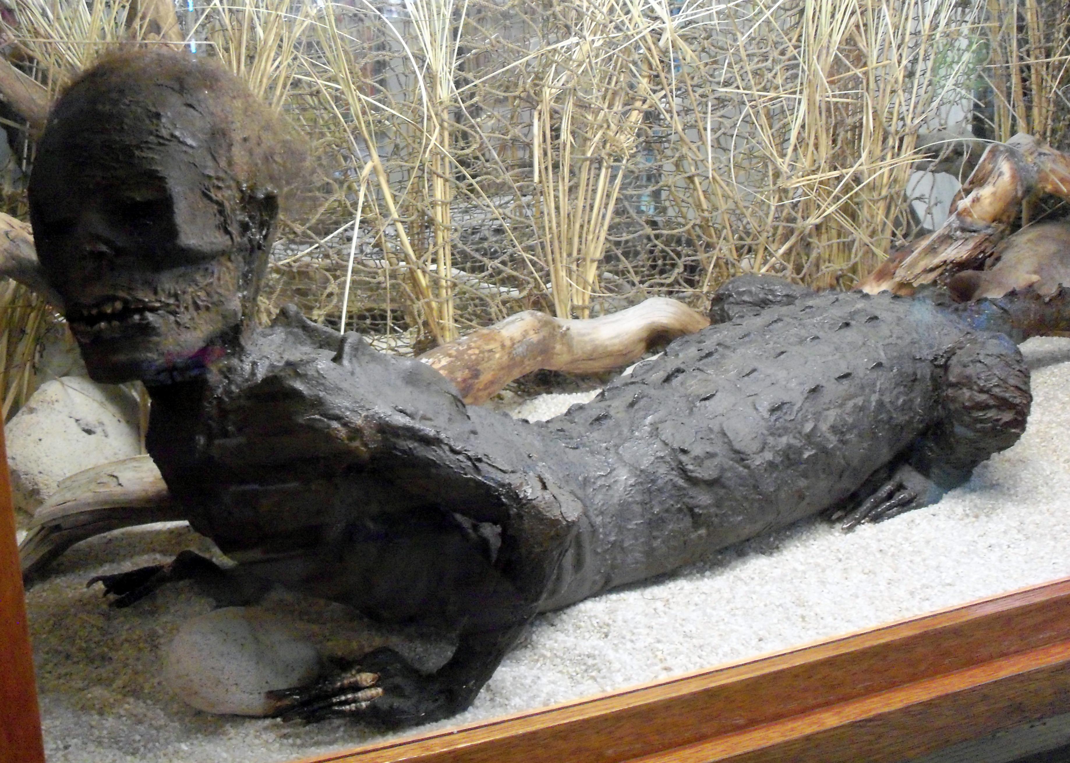 alligator men Browse for alligator man lyrics get one of the browsed alligator man lyrics and watch the video.