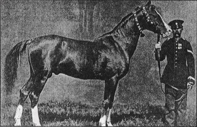 اسب قره باغی