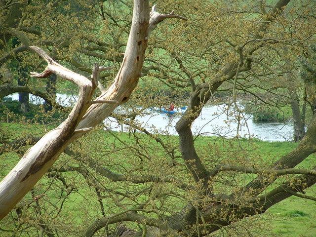 Kayak on the river Waveney - geograph.org.uk - 419312