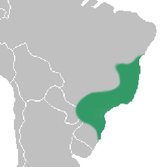 Leptotes distribution map.png