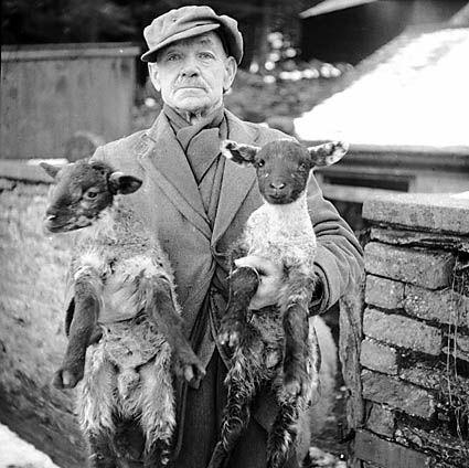 File:Man with New Year twin lambs (6548161805).jpg