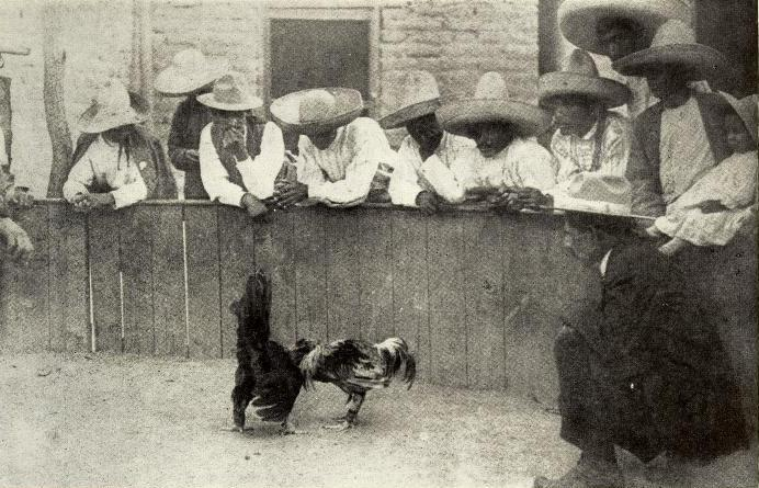 Mexico cockfight (cropped)