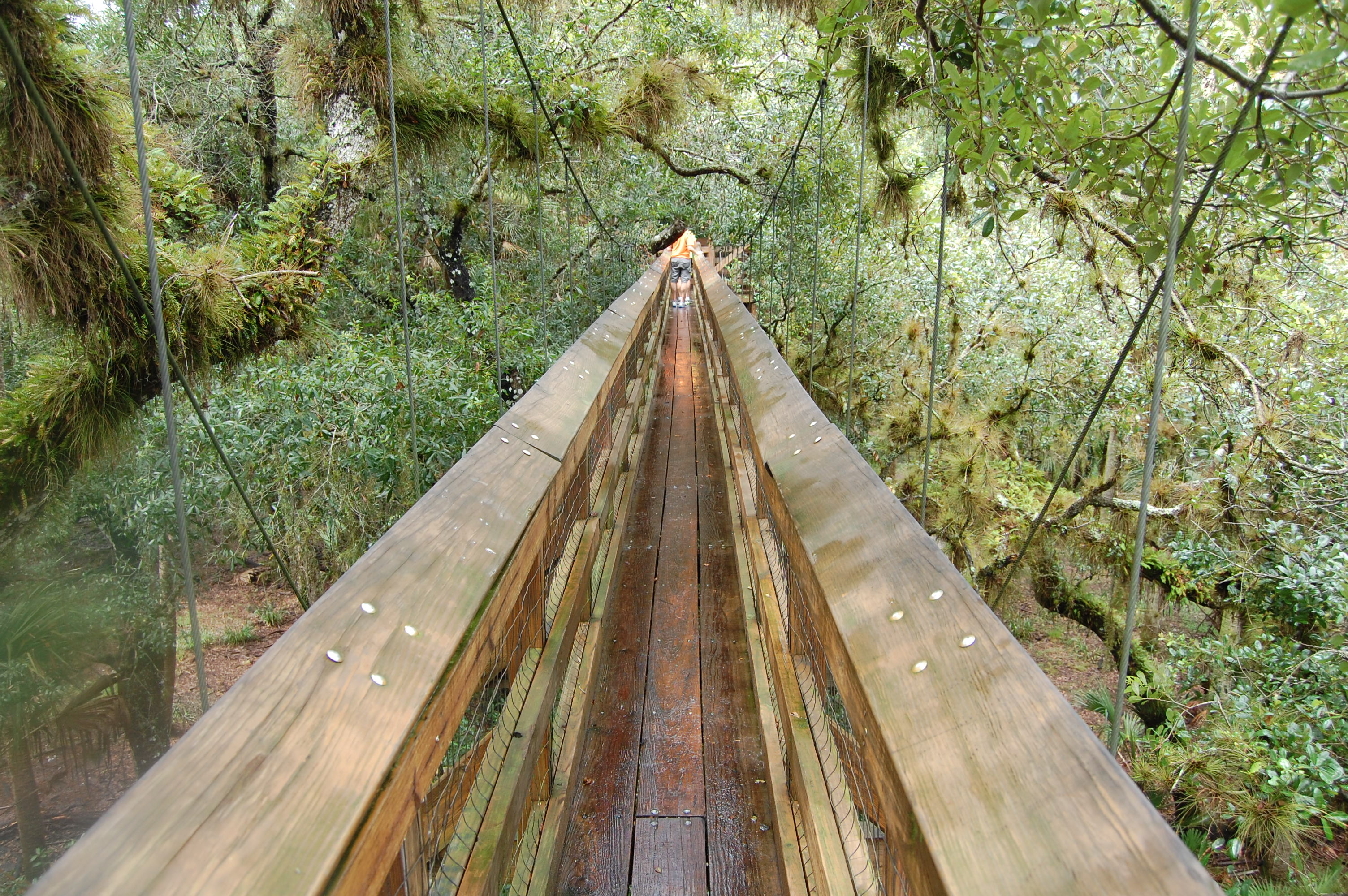 FileMyakka Canopy Walkway.JPG & File:Myakka Canopy Walkway.JPG - Wikimedia Commons