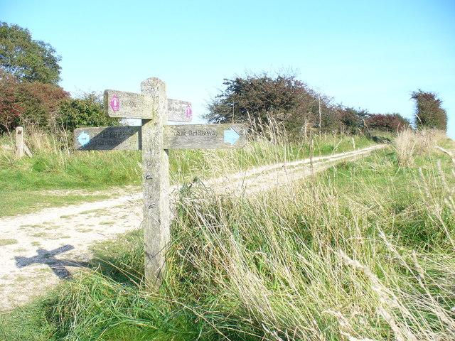 On Kithurst Hill - geograph.org.uk - 985032
