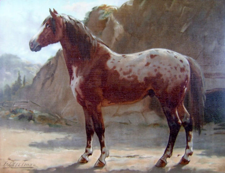 Image Result For Cow S And Horses