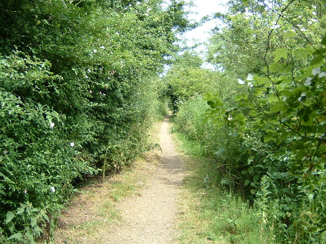 The Thames Path near Culham - geograph.org.uk - 19987