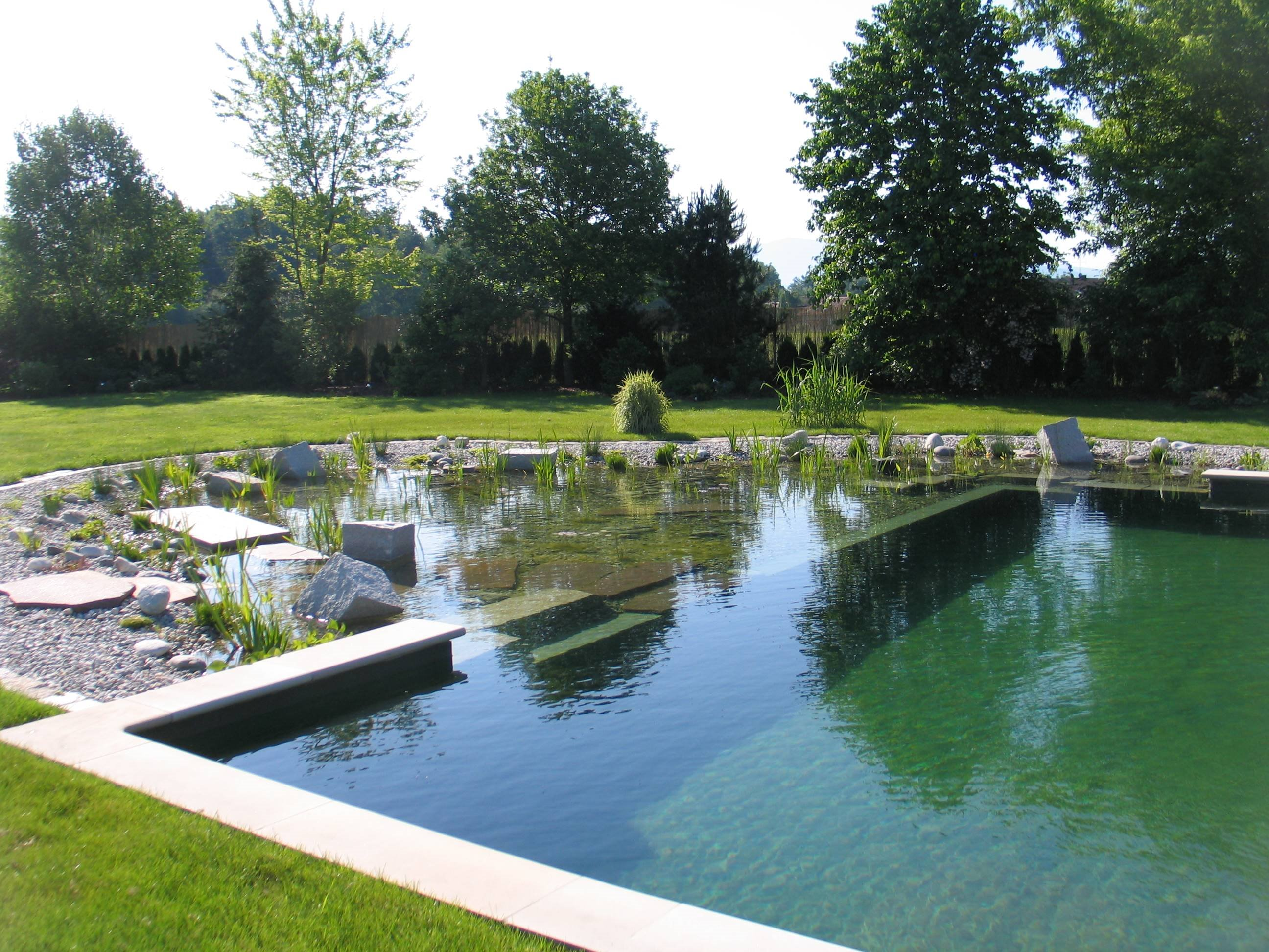 Natural swimming pools for Koi pond swimming pool