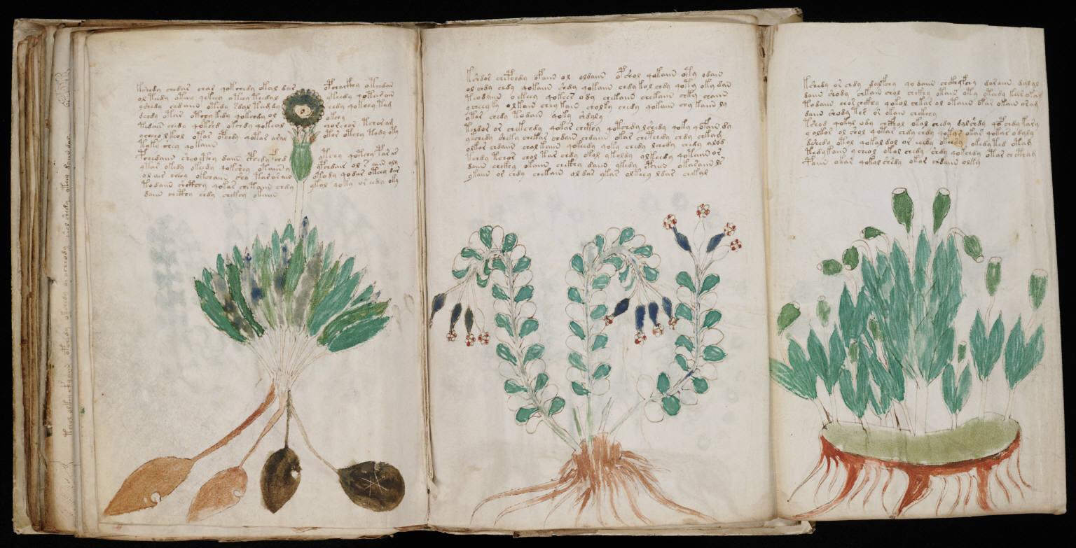 il manoscritto di voyinich