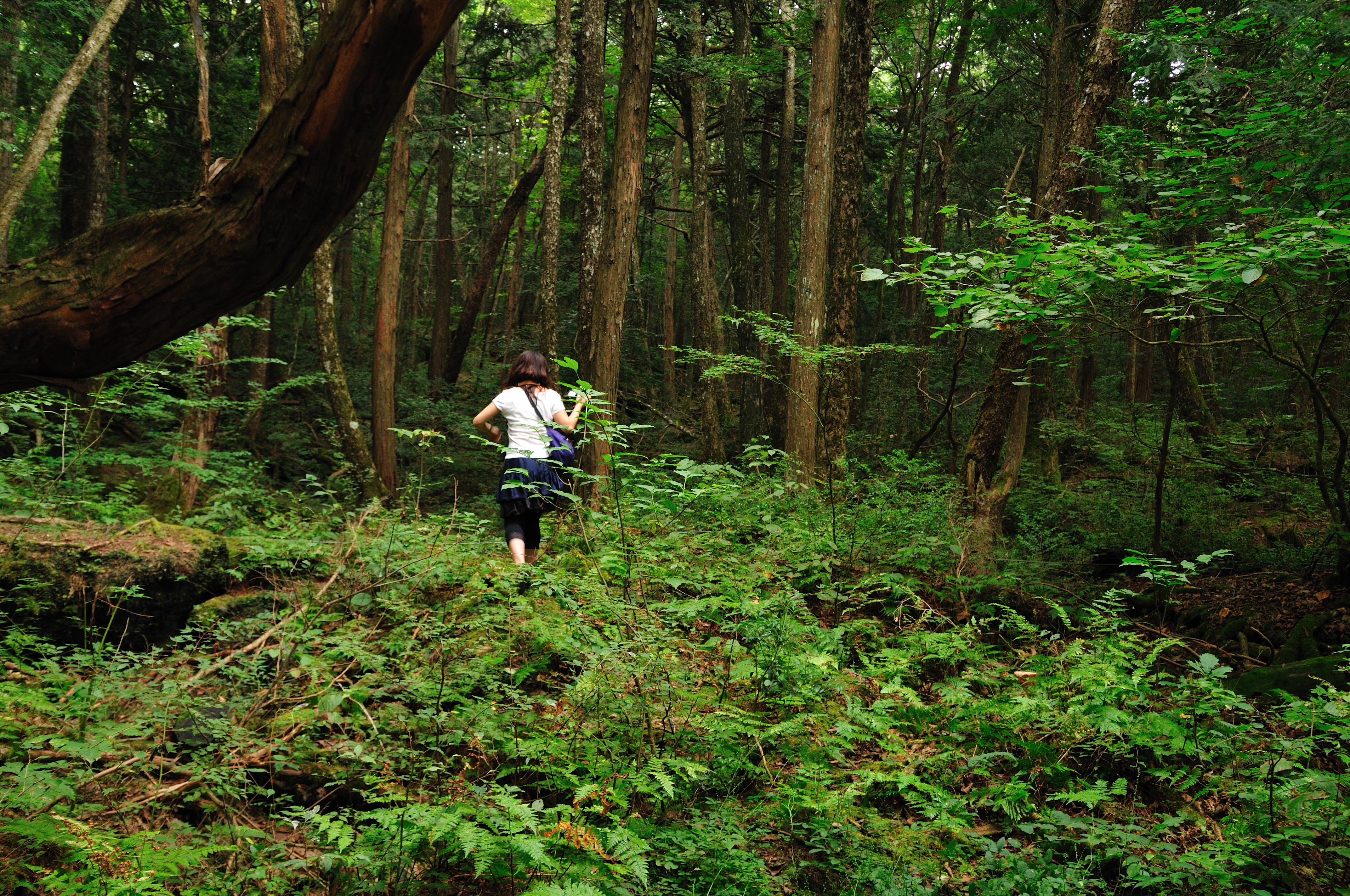 ����aokigahara forest 03jpg wikipedia