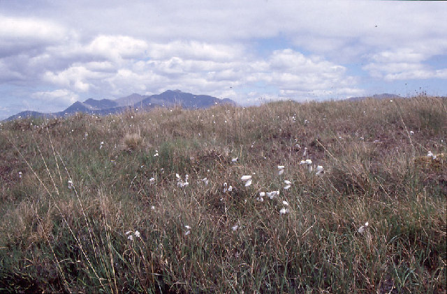 File:Coomnacarraig, blanket bog with bog cotton. - geograph.org.uk - 71230.jpg
