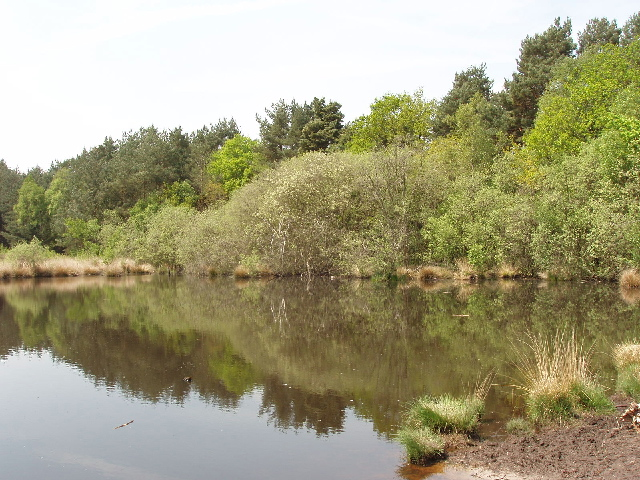 Danewell Pond on Horsell Common - geograph.org.uk - 168237