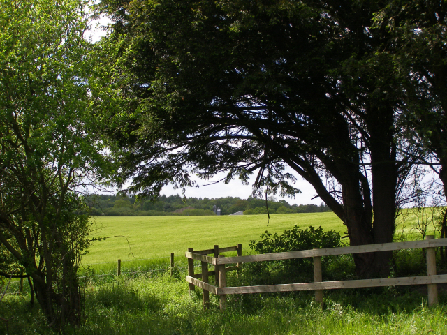 File:Fenced yew on Clearbury Down - geograph.org.uk - 177593.jpg