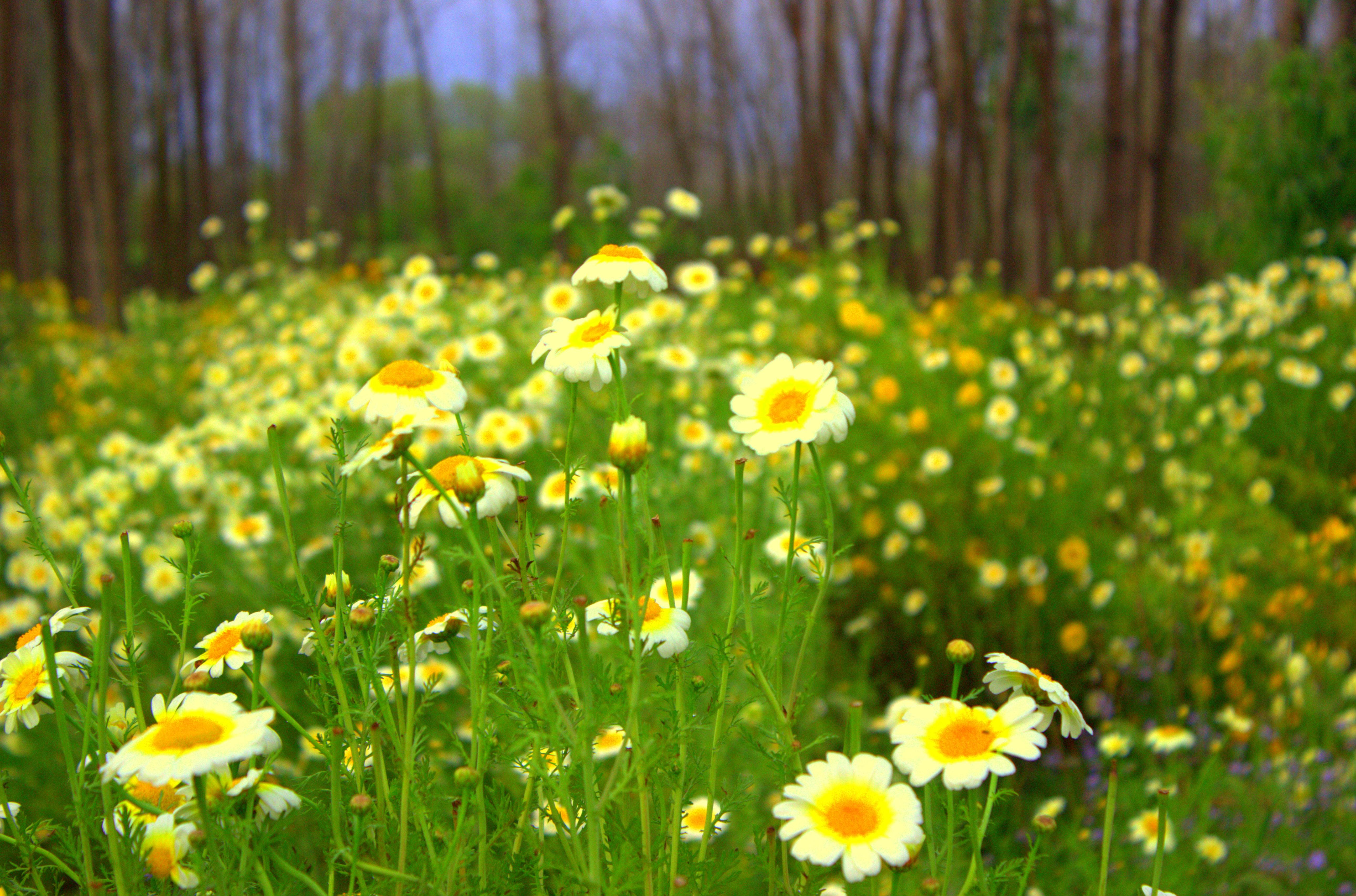 Filefields Of Flowersjpg Wikimedia Commons