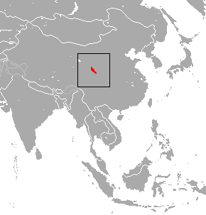 Gansu shrew species of mammal