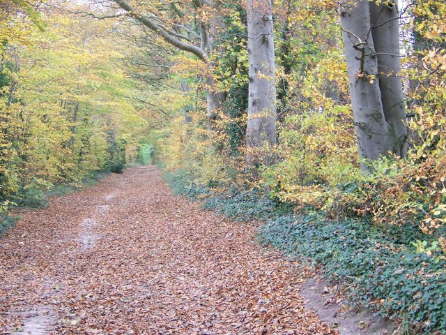 Its autumn in Grovely Wood - geograph.org.uk - 607357