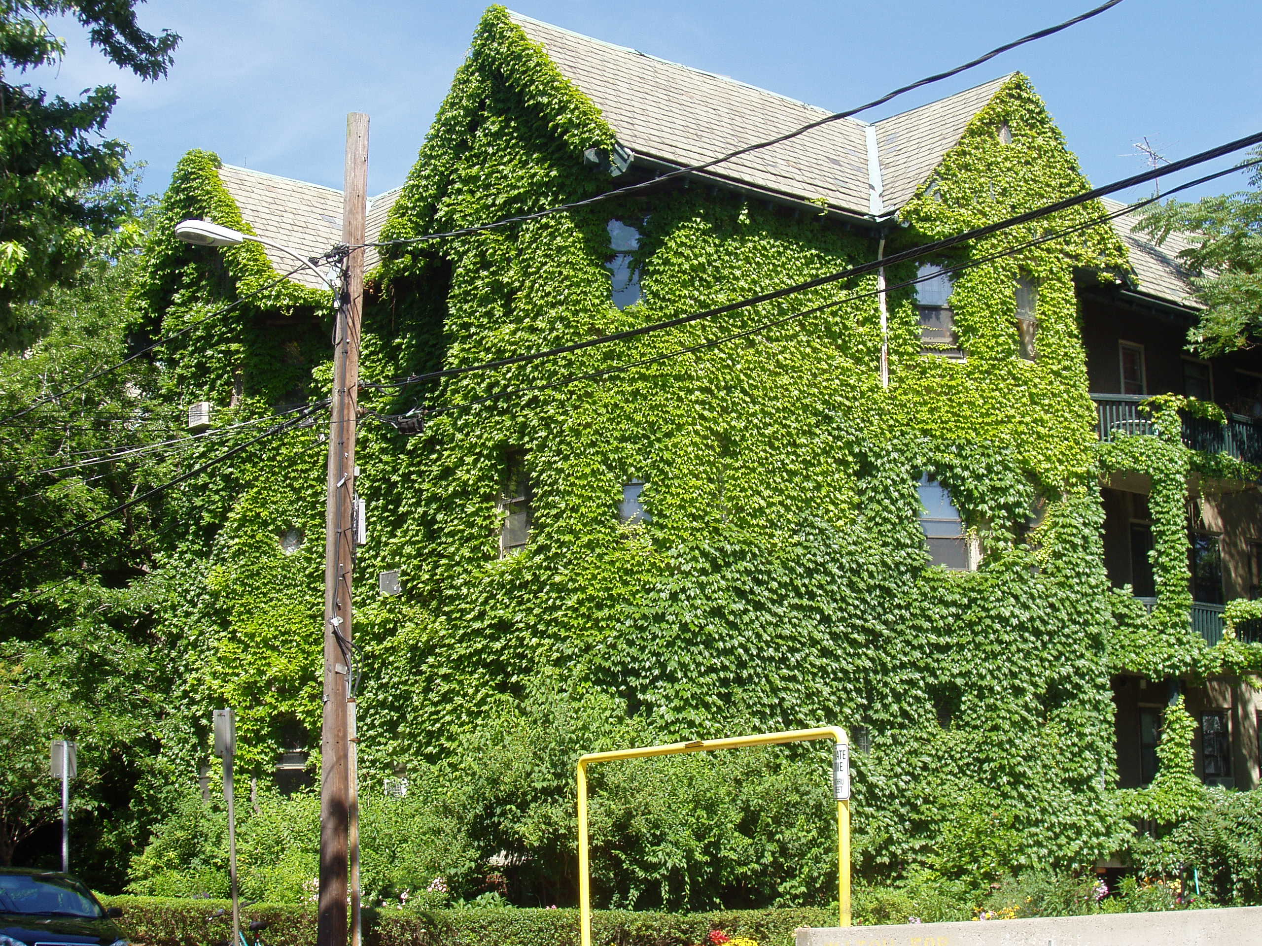 File:Ivy-covered house, Cambridge, Massachusetts.JPG