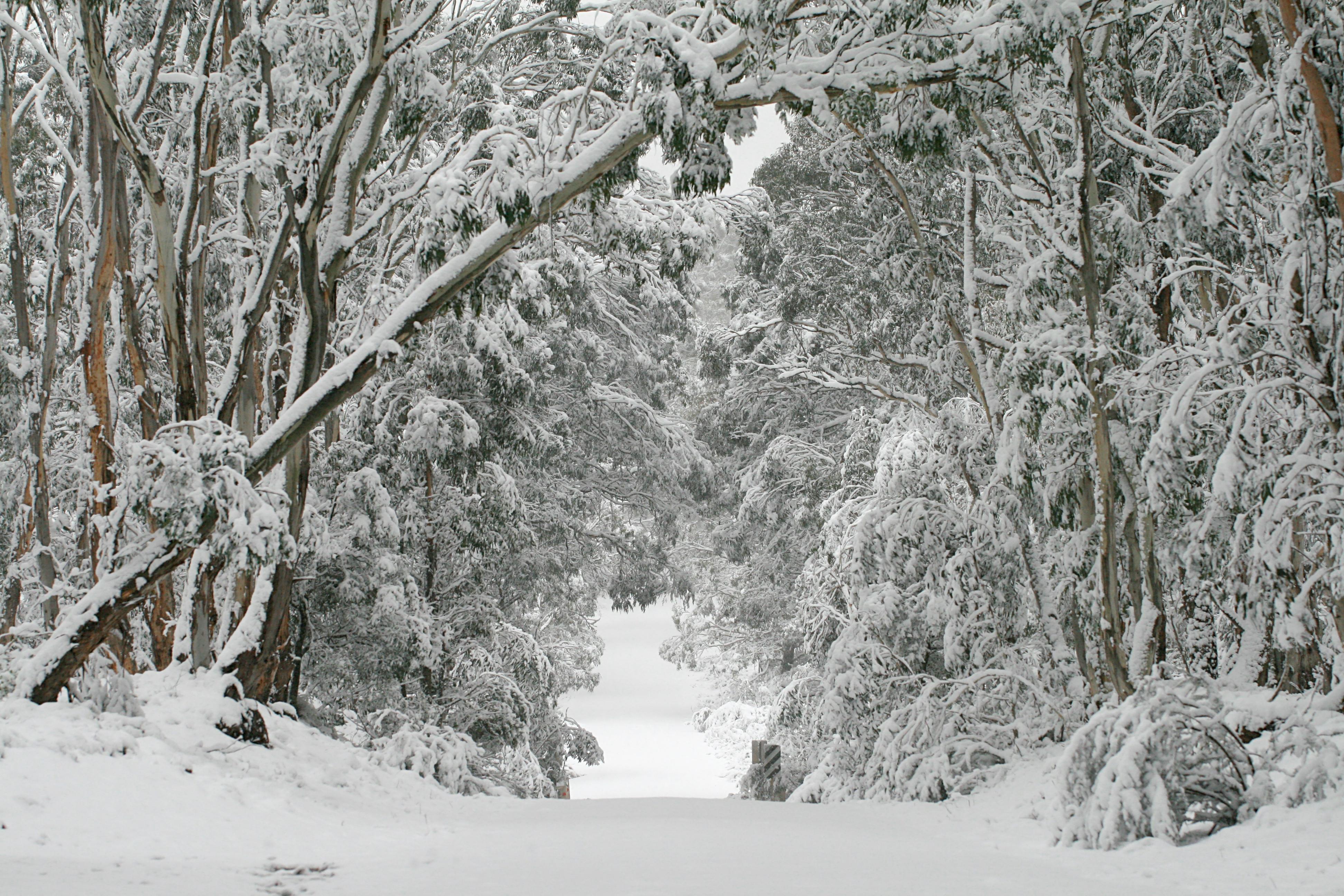 File:Kanangra winter wonderland.jpg
