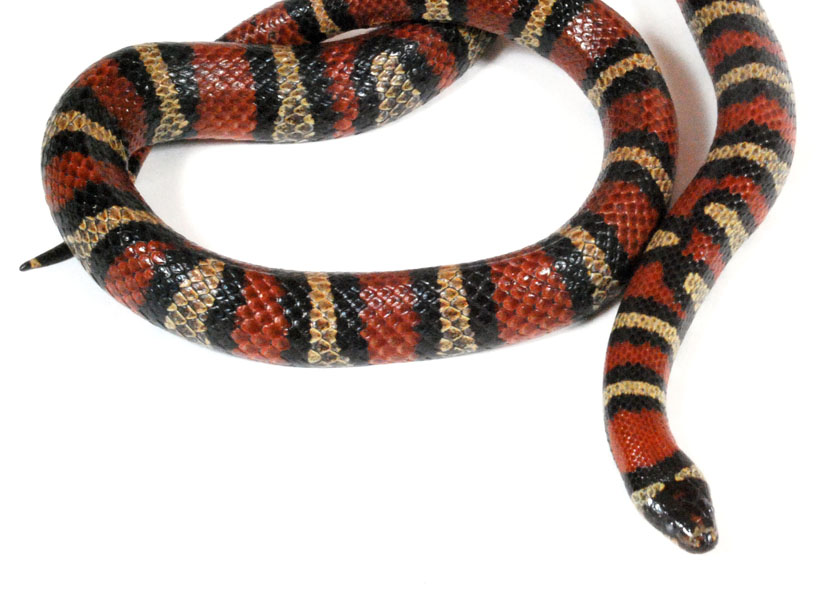 serpent roi wiktionnaire. Black Bedroom Furniture Sets. Home Design Ideas