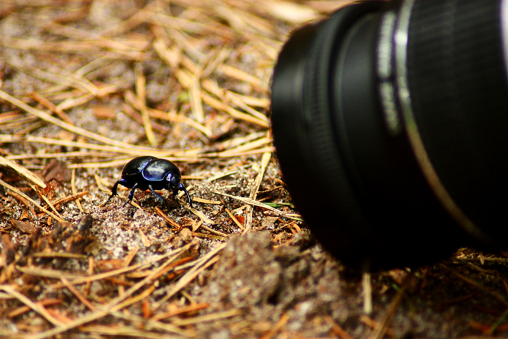 Best Lens For Nature Photography Canon