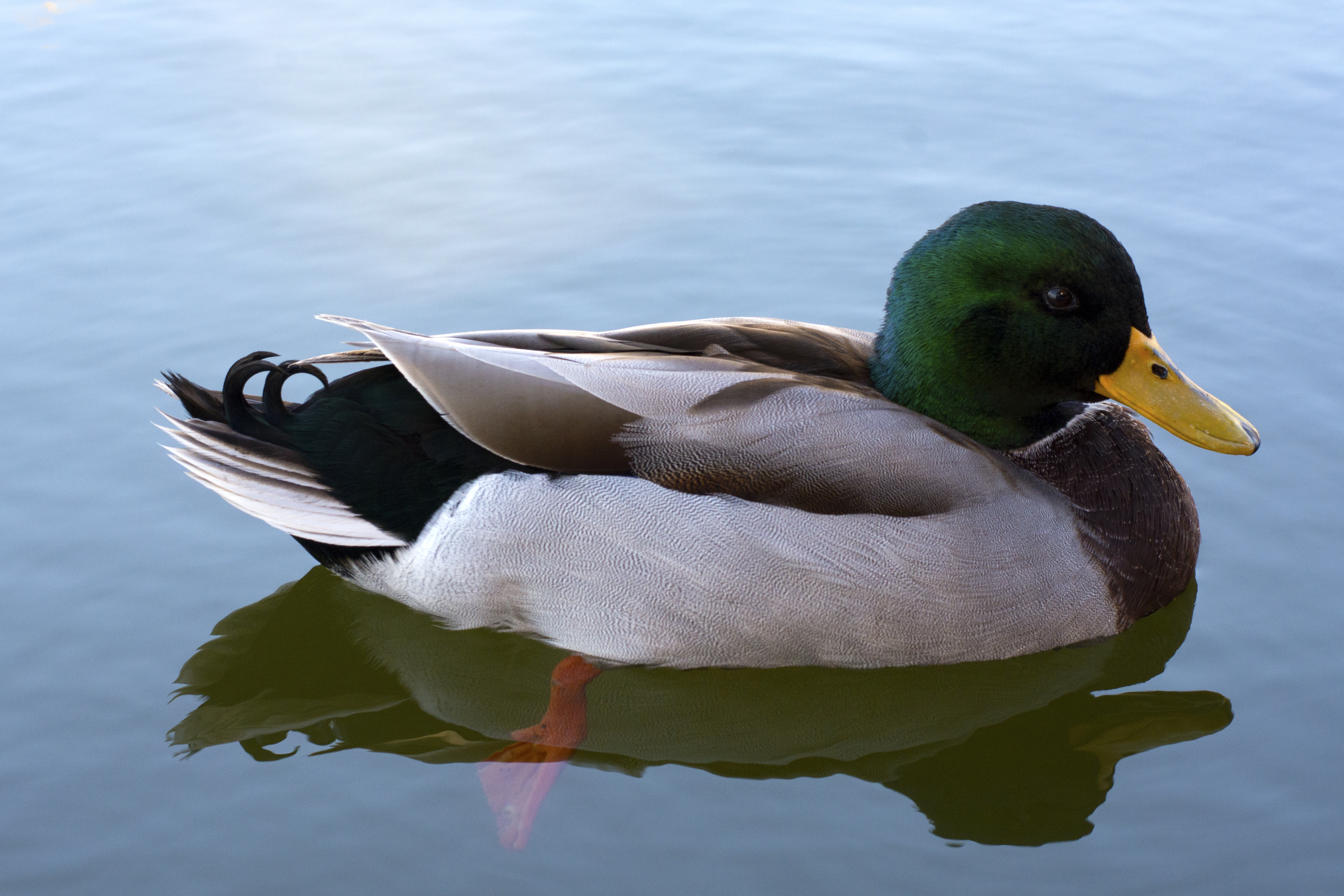 If It Looks Like a Duck It Might Not Be a Duck  The George
