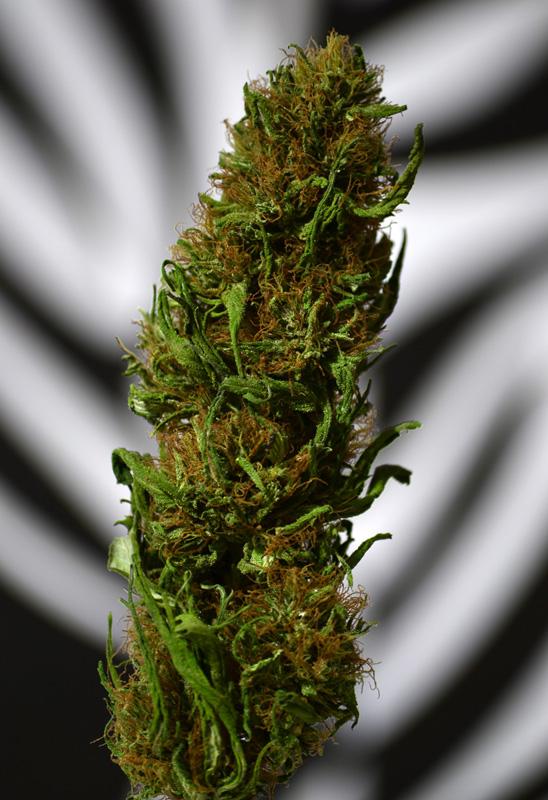 Medical Cannabis A Natural Remedy Or