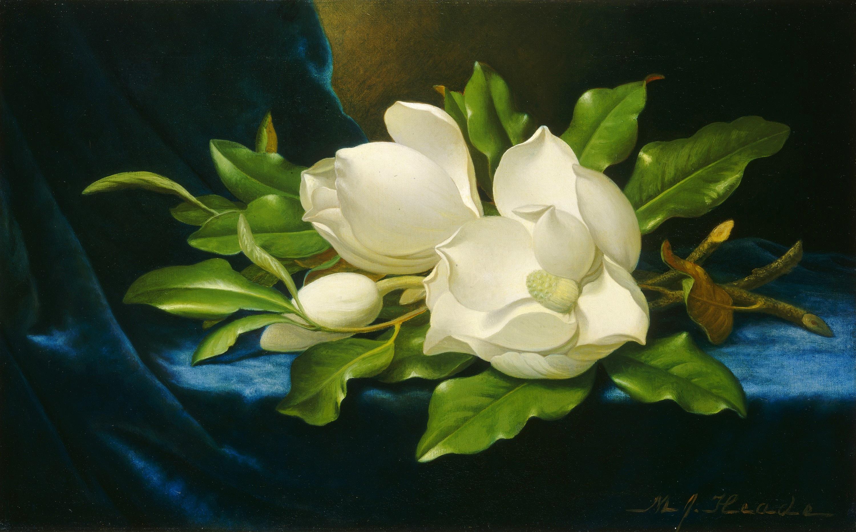 magnolia painting - photo #8