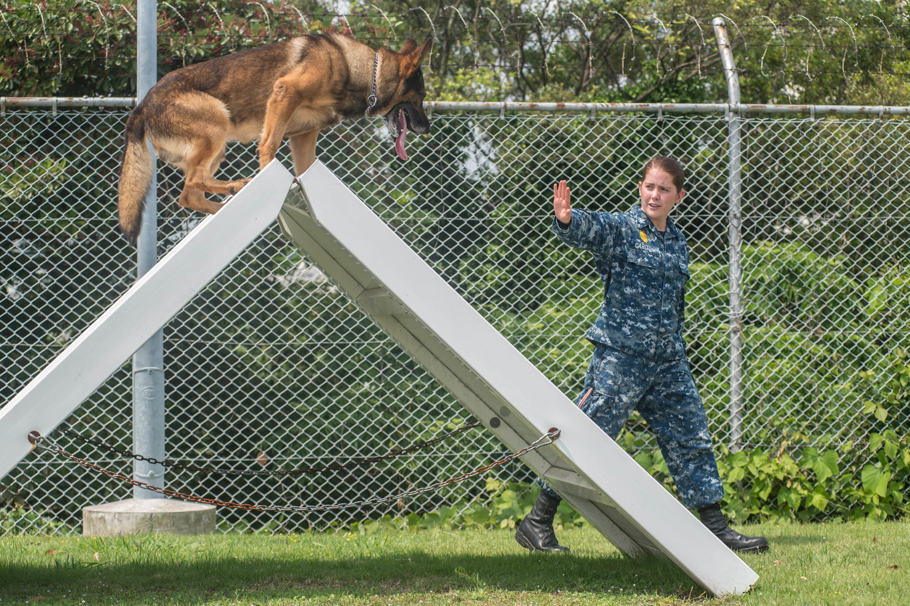 Image Result For Dog Training Courses