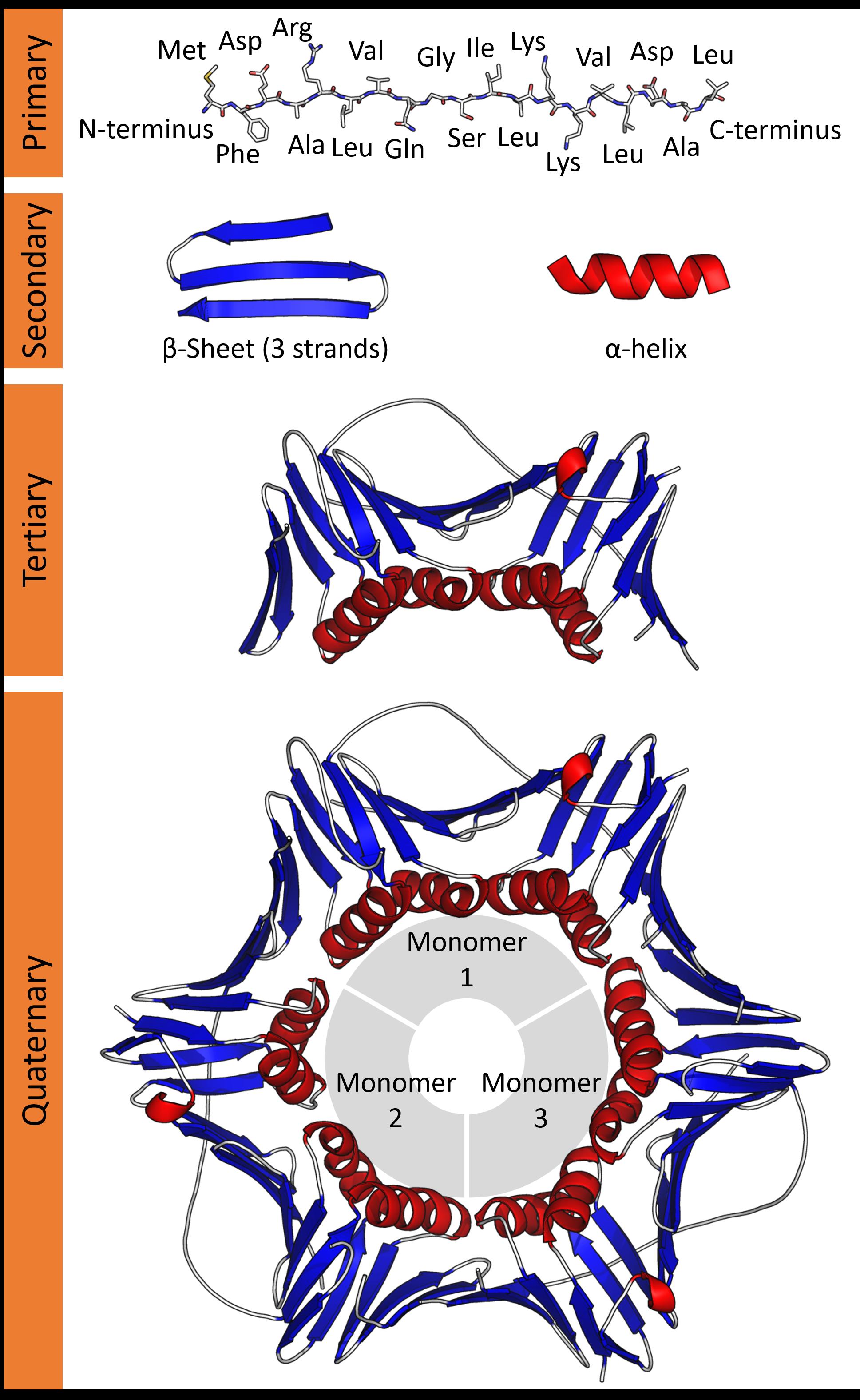 Protein structure - Wikipedia