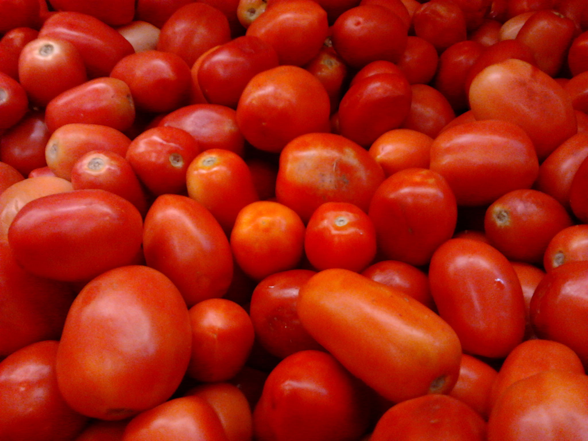 Vegetables You Can Grow Three Guys A Tomato