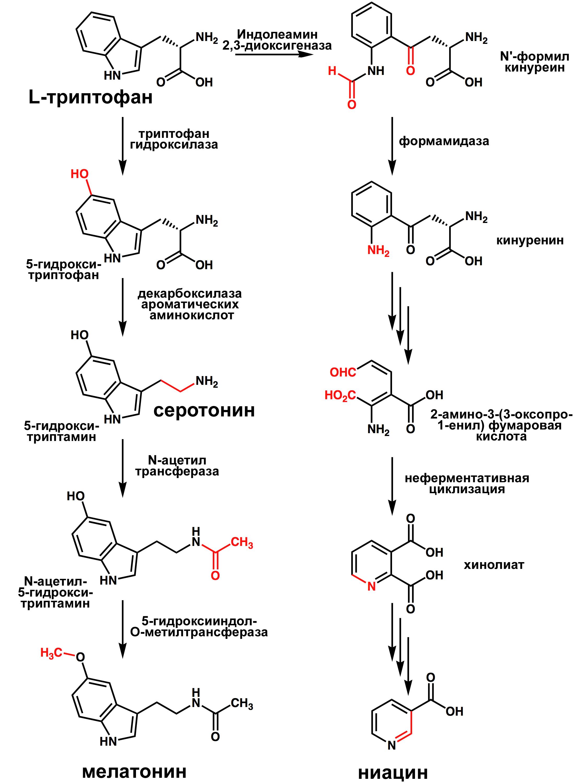5Гидрокситриптамин