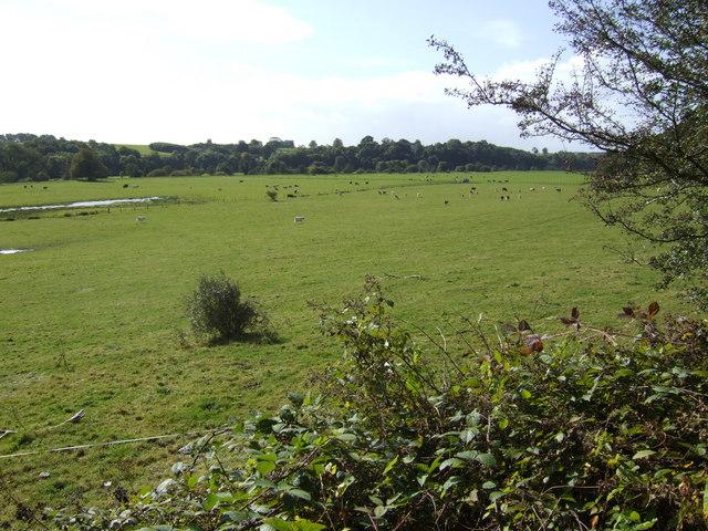 File:Water meadows by the Blackwater - geograph.org.uk - 574630.jpg