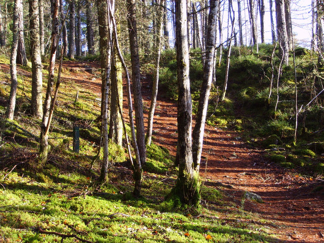 Woodland path above Rogie falls - geograph.org.uk - 607573