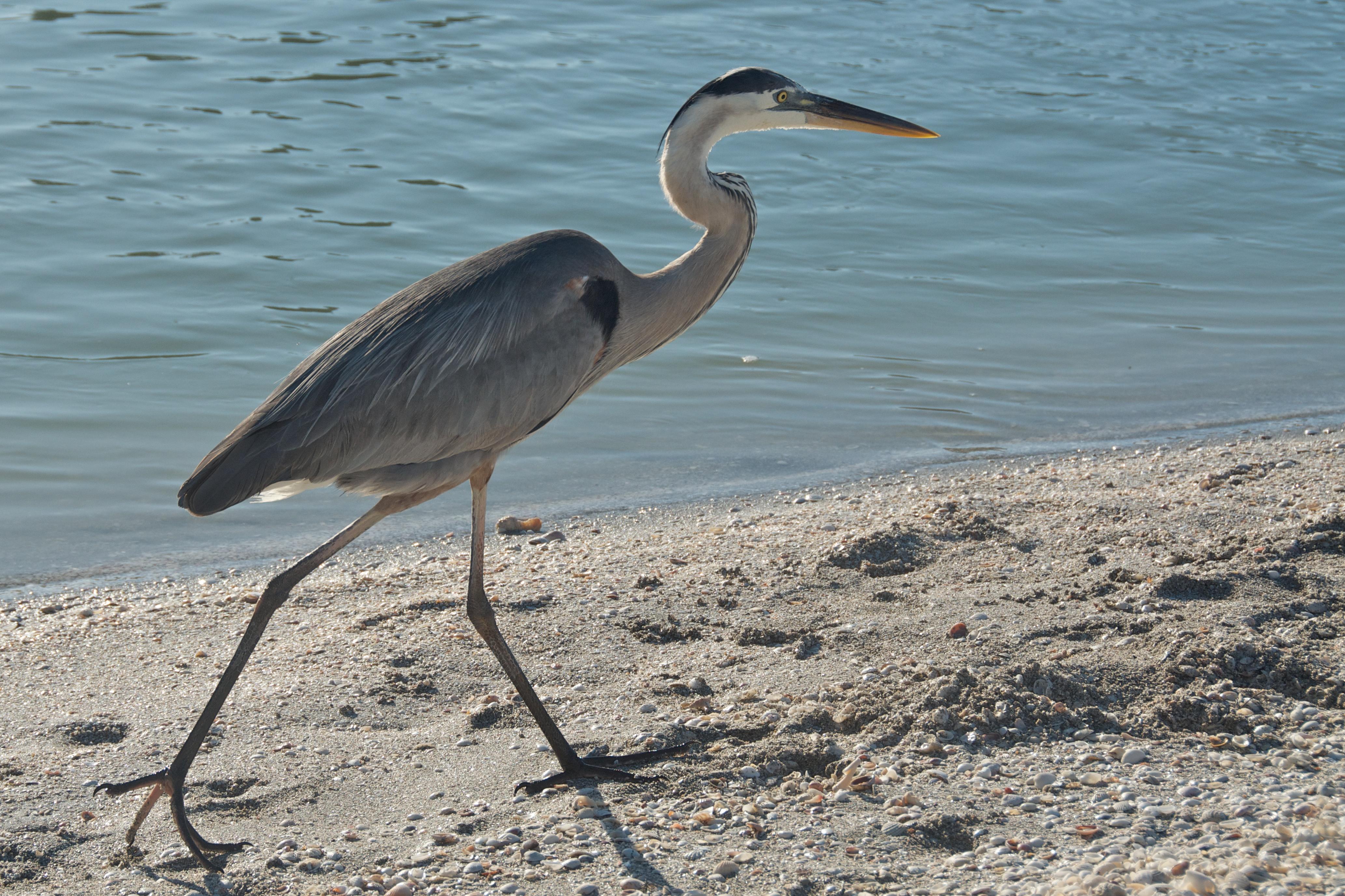 Sanibel Island Florida News