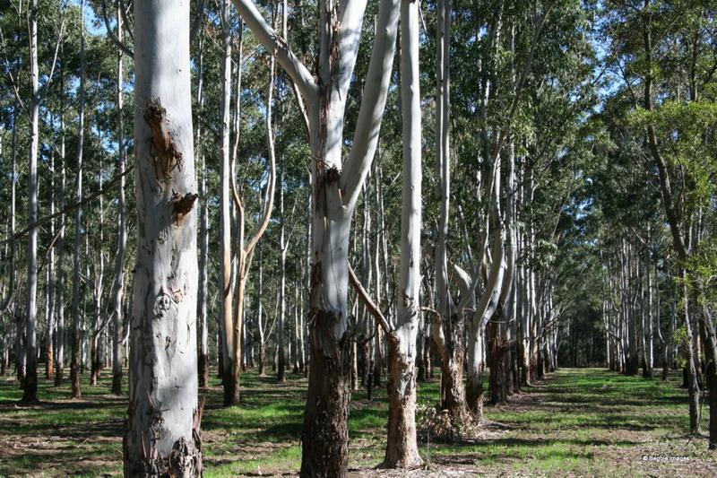 Box Hill, New South Wales - Wikipedia