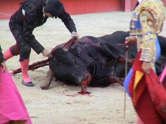 Bull_killed_with_a_dagger_(France).jpg