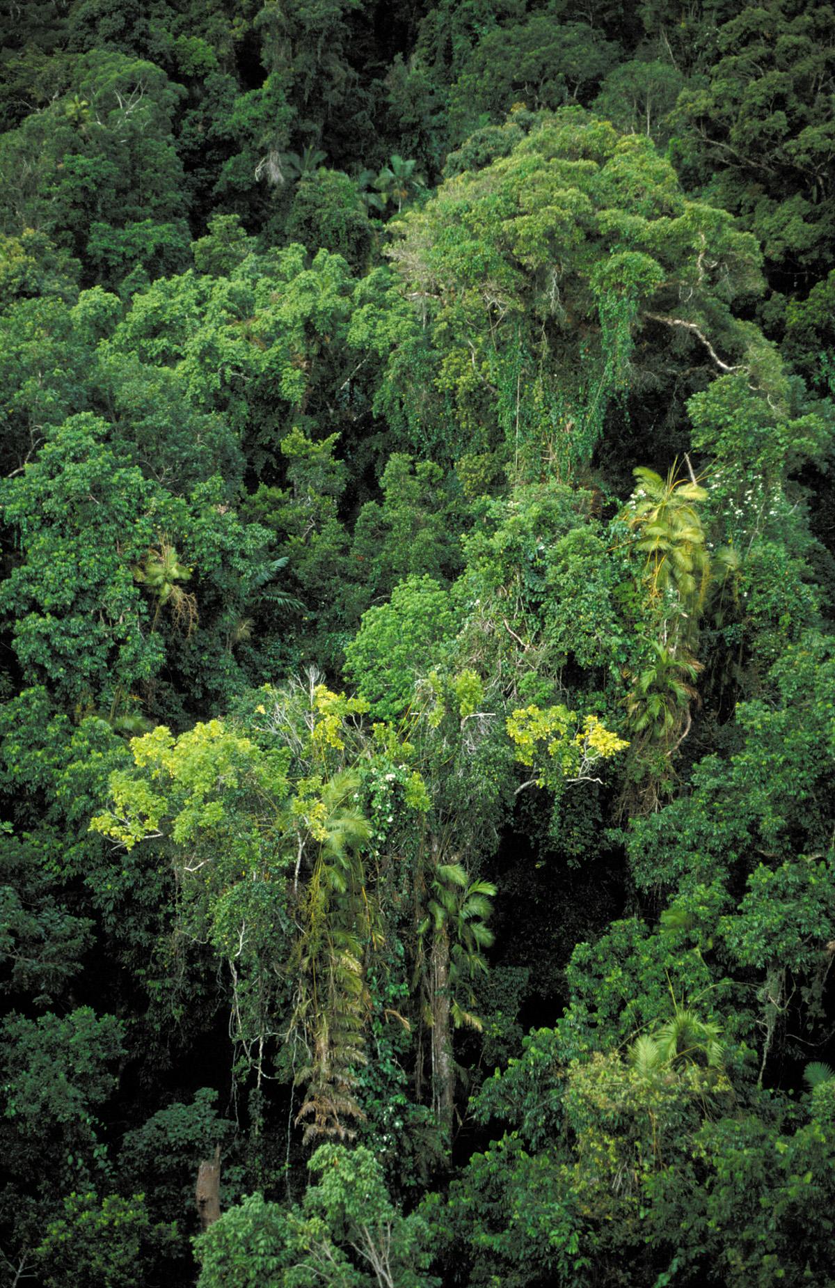 FileCSIRO ScienceImage 3830 Tropical rainforest canopy near Cairns QLD.jpg & File:CSIRO ScienceImage 3830 Tropical rainforest canopy near ...