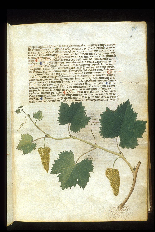 Herbario medieval - Wikipedia, la enciclopedia libre