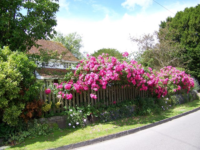 Cottage garden, Coombe Bissett - geograph.org.uk - 871088