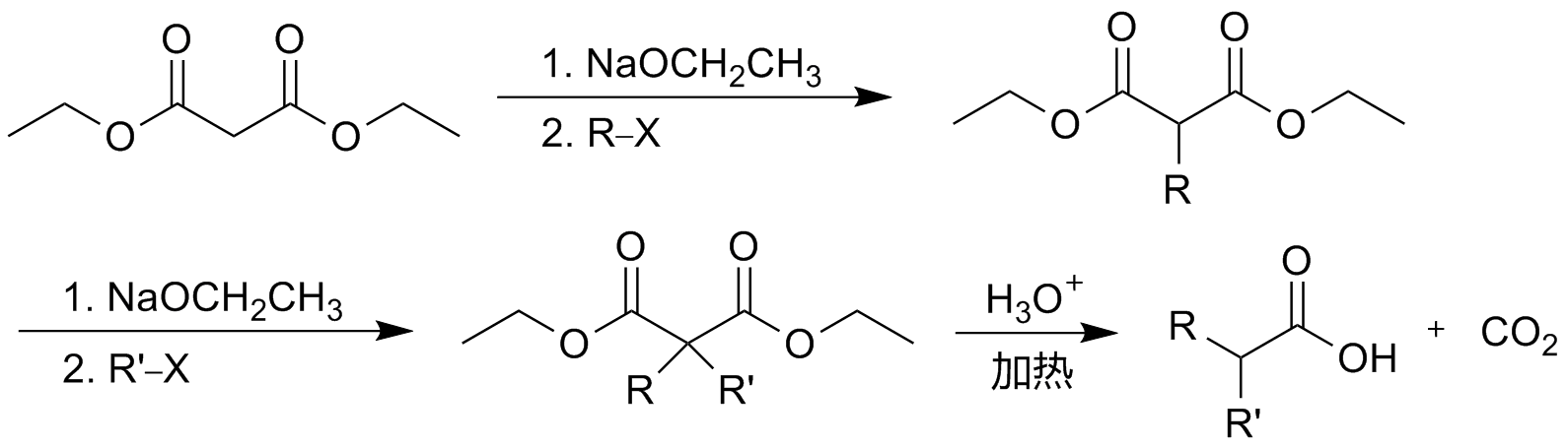 a report on the preparation and purification of an ester The general formula of an ester is rcoor' in which r is the alkyl group that comes from the carboxylic acid while r' is the alkyl group that comes from the alcohol and coo is the functional group of the ester known simply as the ester group.