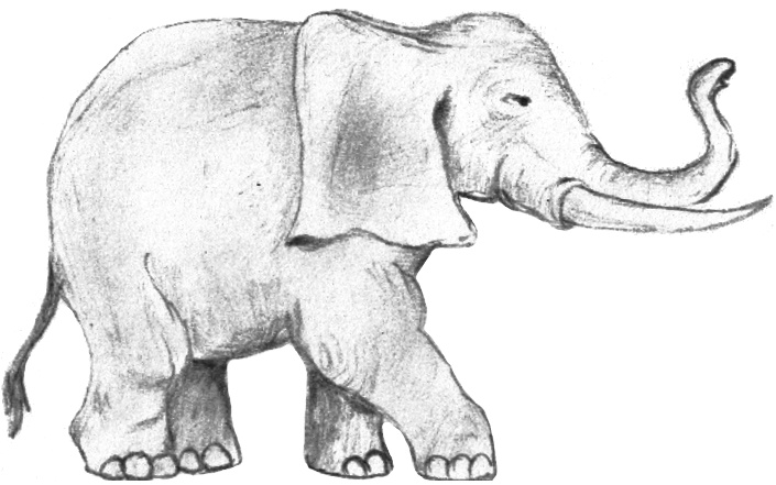 Elephant Png Drawing – If you like, you can download pictures in icon format or directly.