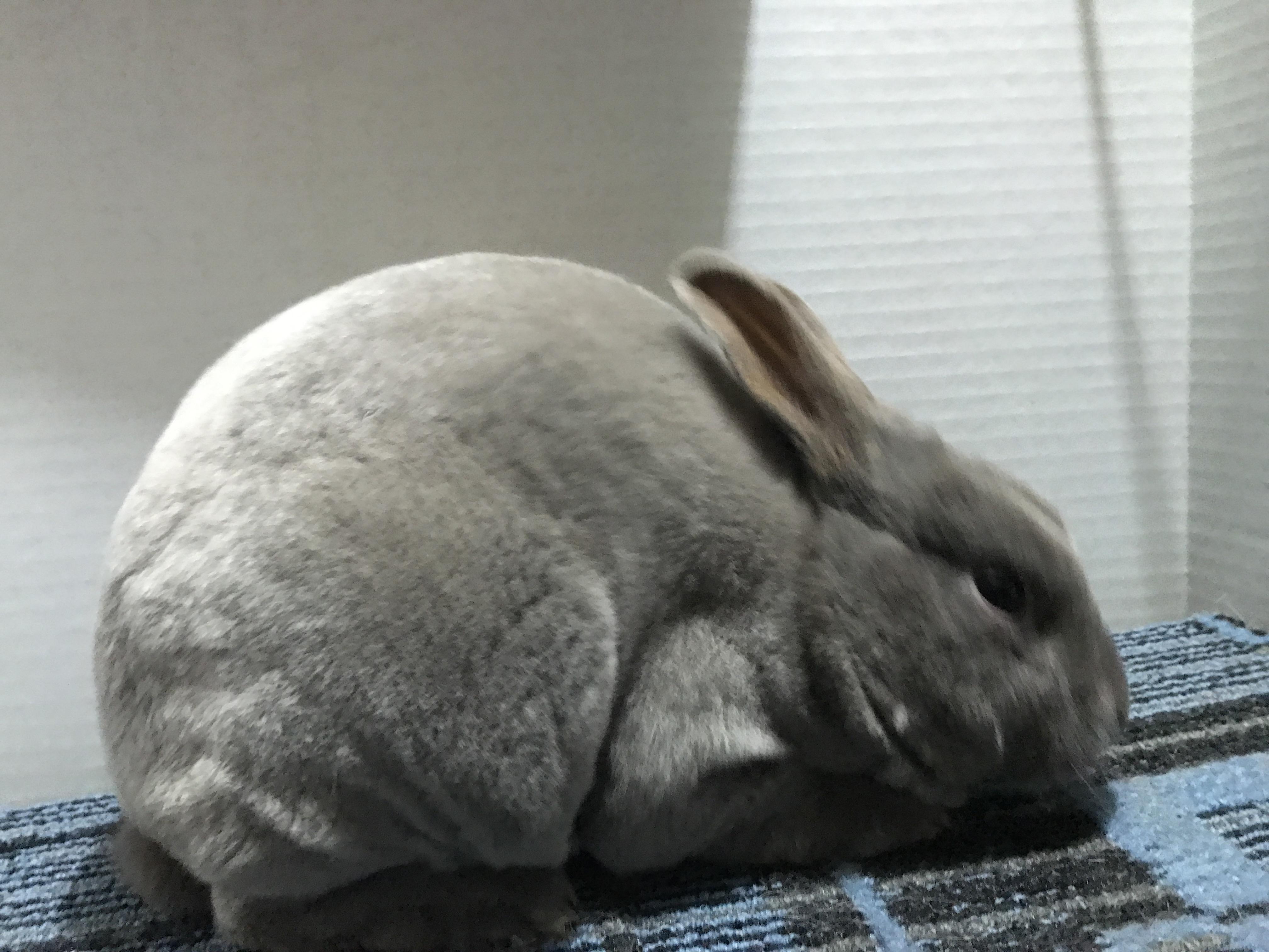 Mini Rex - Wikipedia