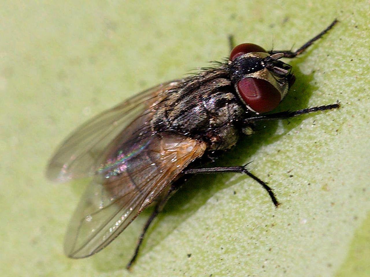 Flies In My Kitchen Sink