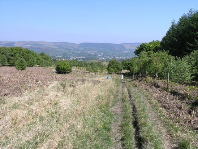 Footpath in Dare Valley Country Park - geograph.org.uk - 425439
