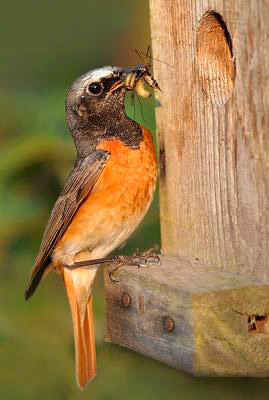 ...прилетевших птиц И...МУЗЫКА В НАШЕЙ ДУШЕ .  Перейди по этой ссылке.