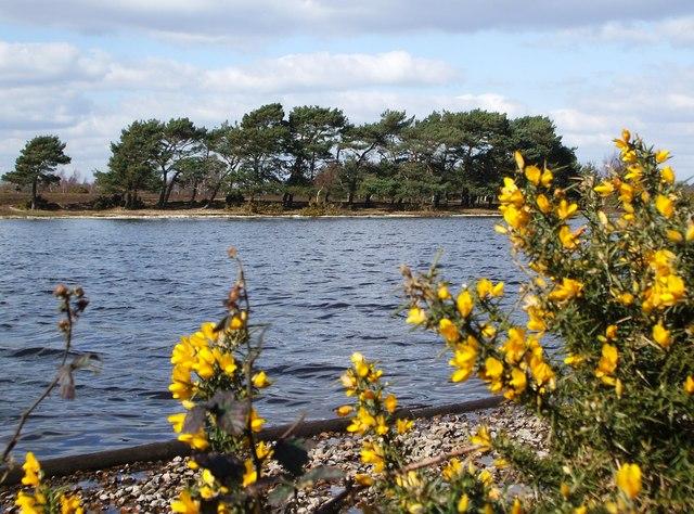 Hatchet Pond Facing West. - geograph.org.uk - 373067