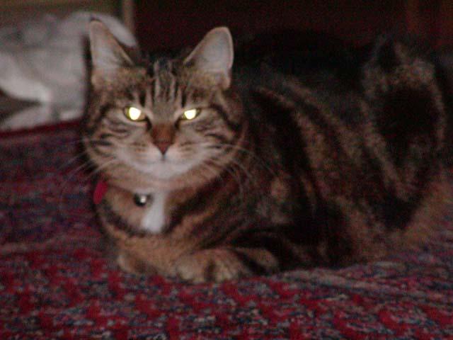 File:Katze Hermine.jpg